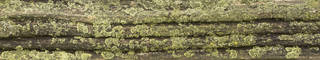 Mossy tree bark 0034