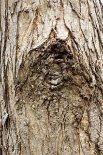Rough tree bark 0020