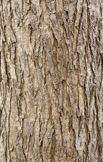 Rough tree bark 0023