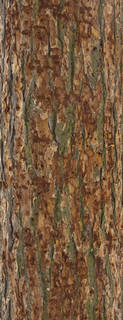 Rough tree bark 0049