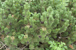 Shrubs and bushes 0011