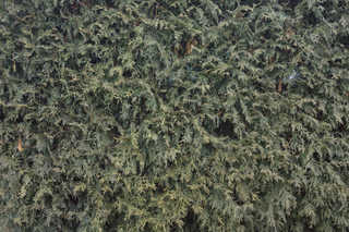 Shrubs and bushes 0014