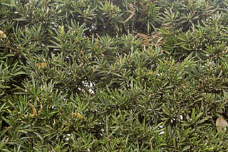 Shrubs and bushes 0041