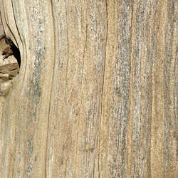 Smooth Tree Bark Category