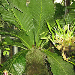 Tropical Plants Category