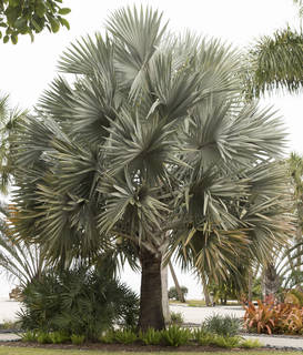 Tropical plants 0032