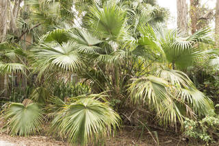 Tropical plants 0040