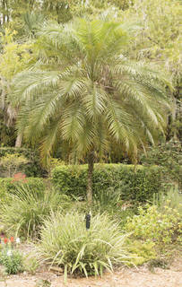 Tropical plants 0042