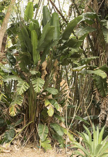 Tropical plants 0043