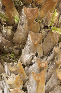 Tropical tree bark 0006