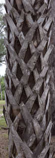 Tropical tree bark 0016