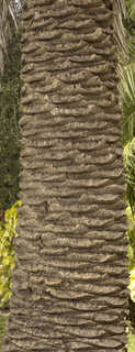 Tropical tree bark 0017