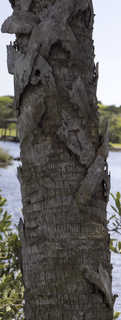 Tropical tree bark 0040
