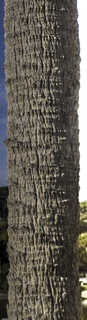 Tropical tree bark 0044