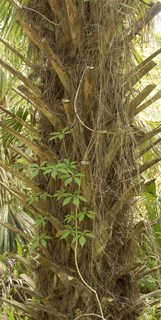 Tropical tree bark 0047