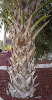 Tropical tree bark 0054