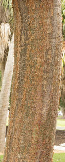 Tropical tree bark 0061