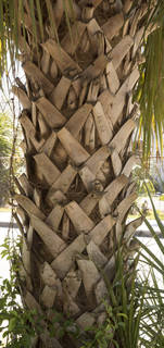 Tropical tree bark 0071
