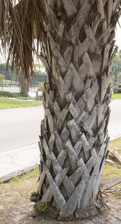Tropical tree bark 0074