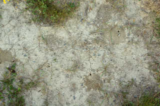 Cracked mud terrain 0005