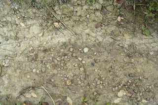 Cracked mud terrain 0007