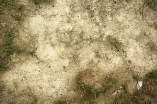 Cracked mud terrain 0013