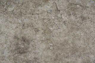 Cracked mud terrain 0016