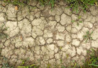 Cracked mud terrain 0019
