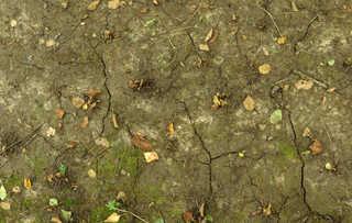 Cracked mud terrain 0021