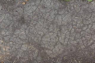 Cracked mud terrain 0035