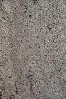 Dirt and mud terrain 0007