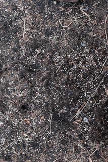 Dirt and mud terrain 0008