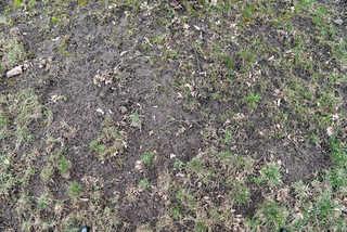 Dirt and mud terrain 0009
