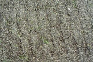 Dirt and mud terrain 0013