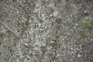 Dirt and mud terrain 0014