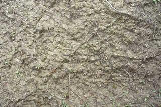 Dirt and mud terrain 0015