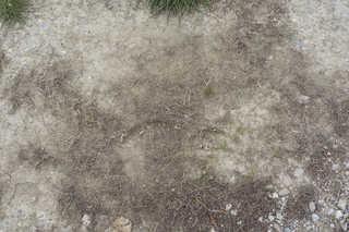 Dirt and mud terrain 0020