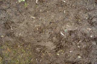 Dirt and mud terrain 0027