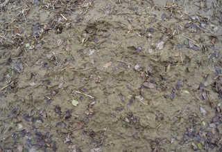 Dirt and mud terrain 0032