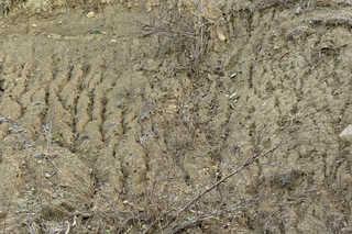 Dirt and mud terrain 0034