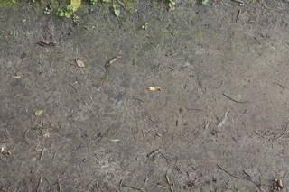 Dirt and mud terrain 0053
