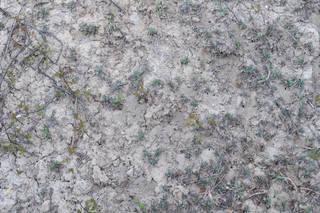 Dirt and mud terrain 0054