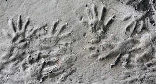 Footprints and animal tracks 0011