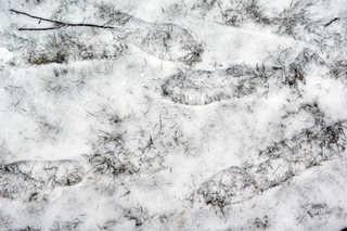 Footprints and animal tracks 0033