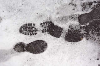 Footprints and animal tracks 0037