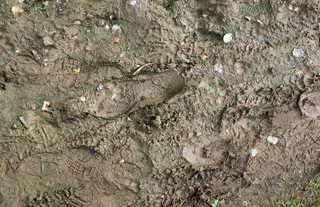 Footprints and animal tracks 0038