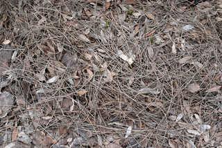 Forest floor terrain 0007