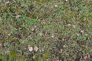 Forest floor terrain 0009