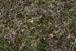 Forest floor terrain 0011