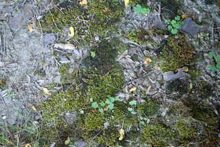 Forest floor terrain 0012